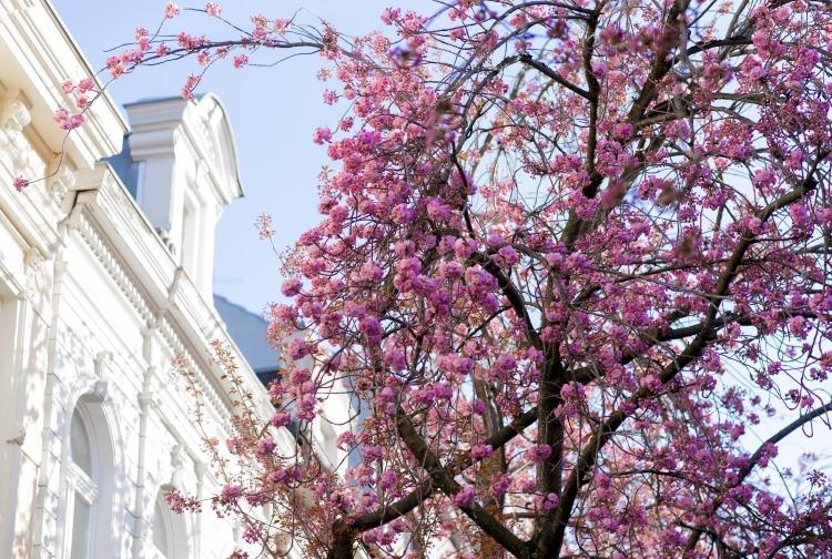 Genau wo kirschblütenfest hamburg Straßenfeste in
